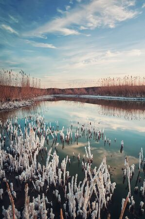 Salted reed vegetation in a little swamp. High level of salt in the pond water makes a white texture on plants and shore. Contrasting nature, vertical background with blue sky reflected in the lake. Imagens