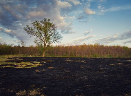 Early spring burned vegetation of a meadow near the forest. Dark ash on the land ground after grass fires. Natural disaster endangering wild flora and fauna. Drought season concept.
