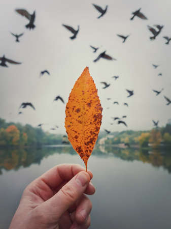 Male hand holding a yellow leaf against the cloudy sky with a flock of flying migratory birds. Autumn mood concept, lifestyle background. Colorful fall trees reflects in the lake water on the horizon Stockfoto