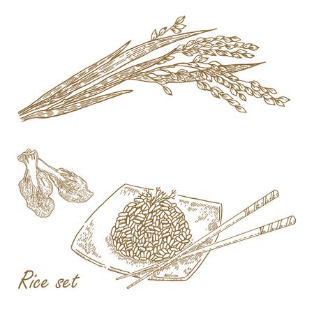 rice plate: Rise set. Hand drawn vector illustration rice plant