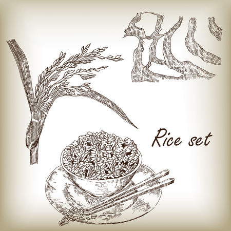 rice plate: Rice set. Spikelet of rice, rice porridge, rice field, hand drawn vector illustration in sketch style