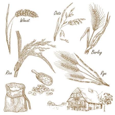 cebada: Cereales establecen. Dibujado a mano ilustraci�n de trigo, el centeno, la avena, la cebada, casa de campo de estilo vintage