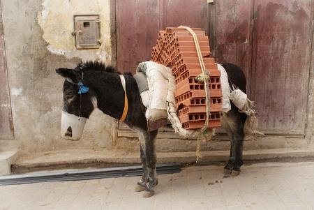 フェズ、モロッコで働くロバ