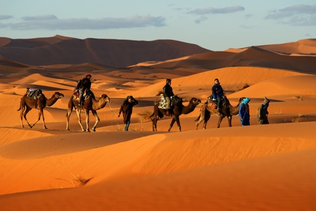 Camel caravan going through the sand dunes in desert