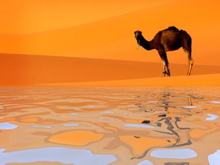 Camel standing on the dunes in desert reflected on the water lake