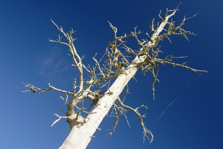 Looking up at a dead tree