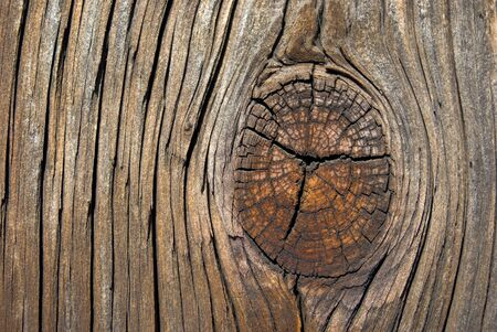 Grainy old wood with knot background photo