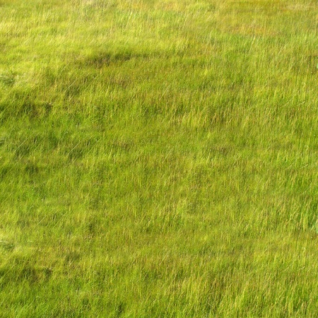 Soft and fresh grass texture photo