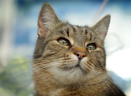 고양이 얼굴 초상화를 닫습니다