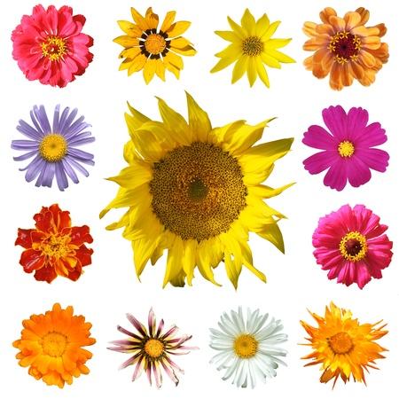 흰색 배경, 상위 뷰에 고립 된 꽃