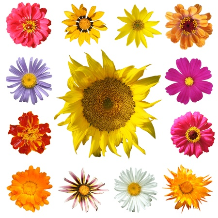 Flowers Isolated on white background, top view