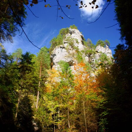 Autumn forest with yellow leavs and a mountain   Stock Photo