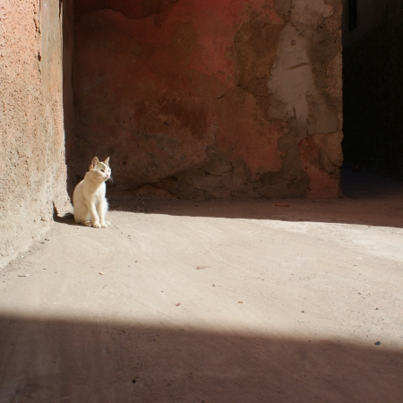 White cat in the streets of Marrakesh photo
