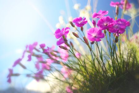 Small violet blossoms in front of a blue sky  Free space to place or copy text   Stock Photo