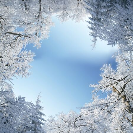 Winter frame of trees covered by snow photo