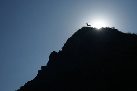mountain goat silhouette standing on a cliff
