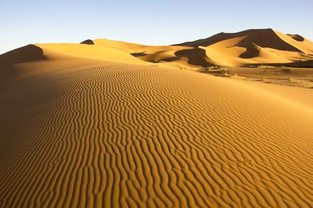 merzouga: Wind-blown lines at Erg Chebbi near Merzouga in Morocco