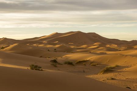 southeastern: Large seas of dunes of Saharan Erg Chebbi near the Merzouga village in the southeastern Morocco.