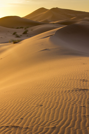 billowing: Sand dunes billowing in the shine of the setting Sun. Stock Photo