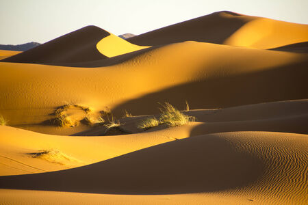 billow: Large seas of dunes during sunset in Erg Chebbi near Merzouga in Morocco