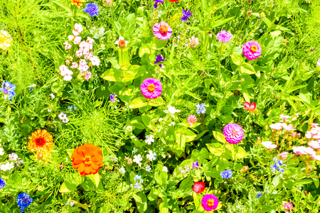 Red poppies, blue cornflowers and colorful summer wild flowers in Europe, Czech