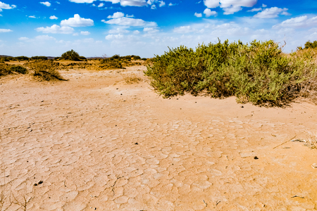 Dry desert with green small plants in southern Morocco, Erg Chebbi, Morocco in Africa