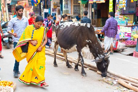 India, Varanasi, Mar 10 2019 - Unidentified hindu woman and sacred cow on the streets of sacred Varanasi old town.