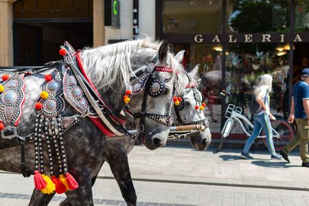 Krakow, Poland, 10 May 2019 - Horse carriages at main square in Krakow in a summer day, Poland 新聞圖片