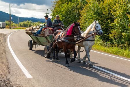 Transylvania, Romania - July 30, 2019: A horse pulling a cart, in which three people are sitting on a cargo of spruce branches. Photographed on a country road in Transylvania, Romania.