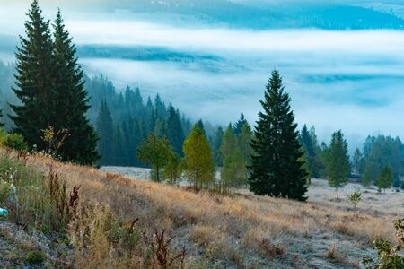 Beautiful foggy sunrise in mountains, countryside scenery with tall spruce trees on the meadow, Romania.