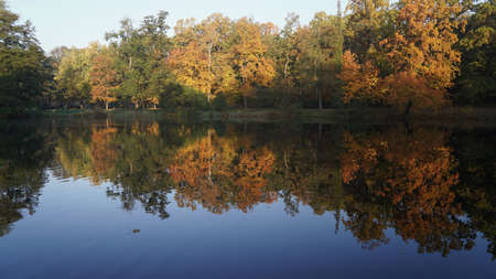 morning, walk in the autumn park, lonely maple leaf floating on the pond, reflection of colorful trees in the water 스톡 콘텐츠