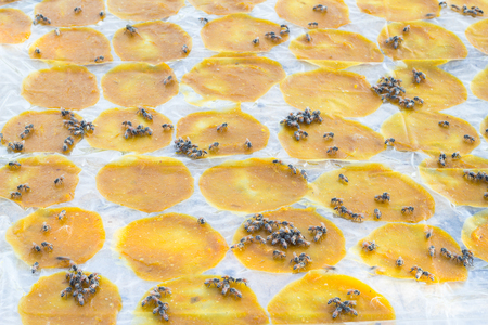 conservacion alimentos: la conservaci�n de alimentos mediante el uso de la luz solar Foto de archivo