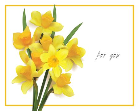 bouquet of yellow daffodils on a white background. Photorealistic vector. for you