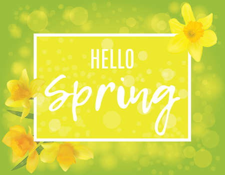 Flowers of daffodils, text. Hello spring. Bright yellow banner with bokeh. Vector flower. Reklamní fotografie