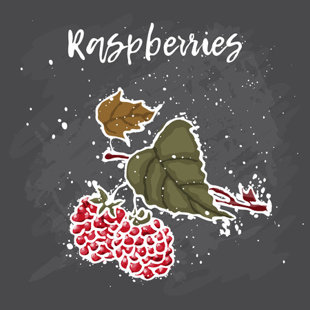 Raspberries hand drawn painting grunge on black background. Vector illustration of berries Ilustrace
