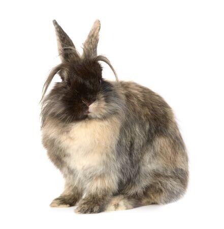 Rabbit on white background. Stock Photo - 12911256