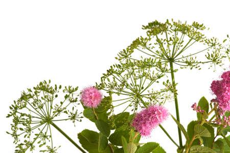 wild flowers Stock Photo - 14745951