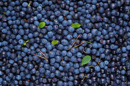 Background of ripe wild berries  Blueberries Stock Photo - 14827040