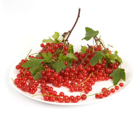 Red currant  Stock Photo - 15329186