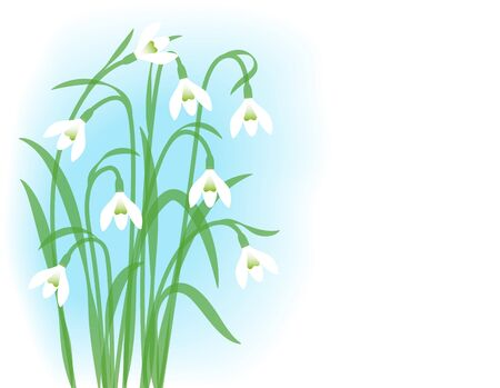 Snowdrops. Greeting card with first spring flowers. Illustration