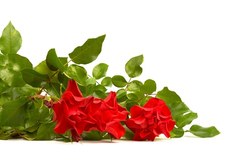 Bouquet of red roze on white background   Stock Photo