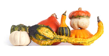 Colorful gourd family