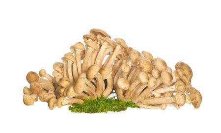 Honey agarics. Raw mushrooms on white background. Armillaria Stock Photo