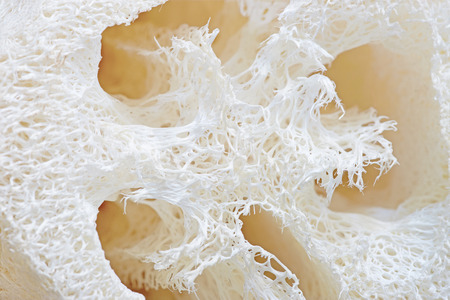 Loofah texture. Natural vegetable fiber for body scrubbing.