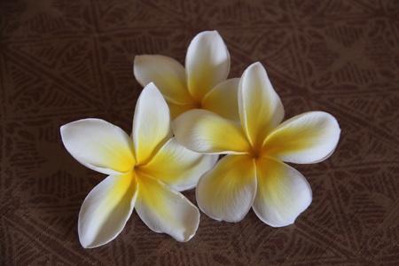 Three plumeria flowers artistically arranged