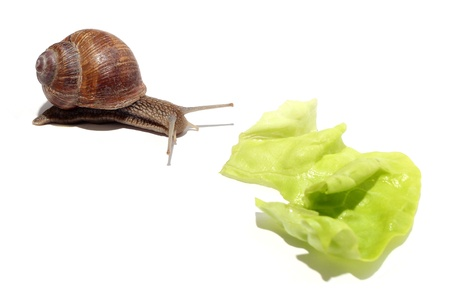snail and salad Stock Photo