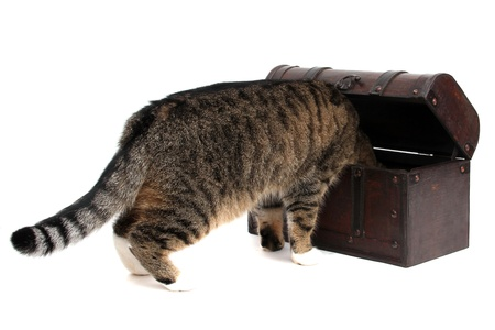 inquisitively: treasure chest with inquisitively cat
