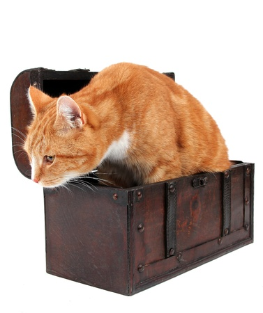 inquisitively: tomcat in chest