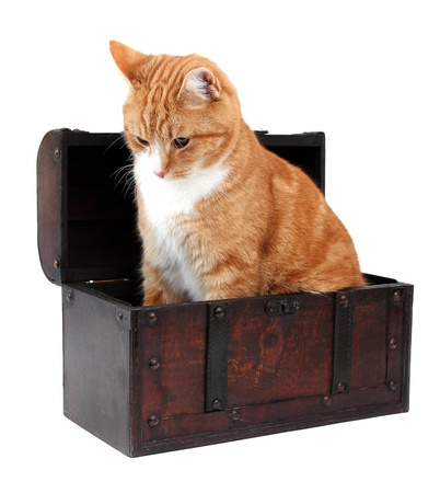 inquisitively: pet in treasure chest