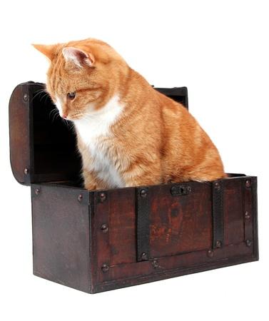inquisitively: inquisitive tomcat in chest